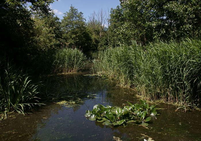 secretos de londres parque natural camley street