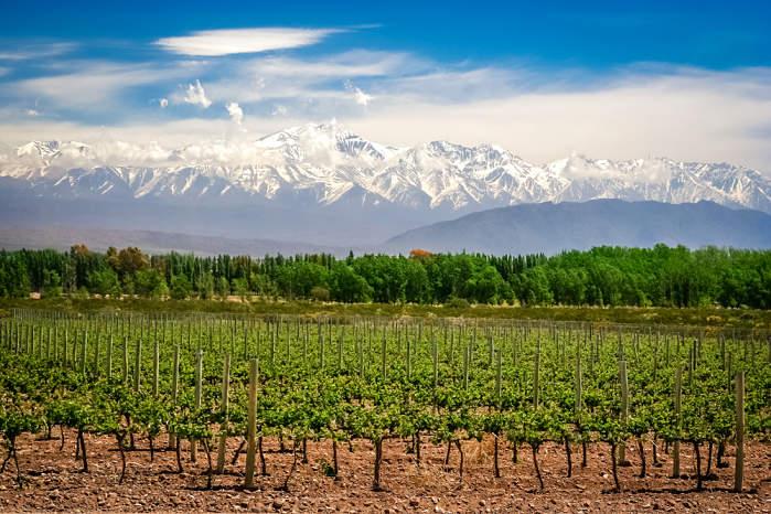 Turismo gastronómico Argentina Bodegas de Mendoza