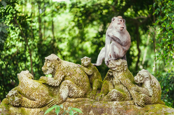 Monkey Forest en Indonesia