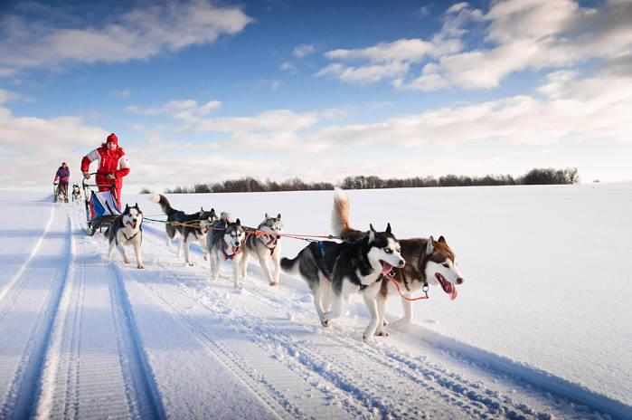 Trineo de perros en Islandia