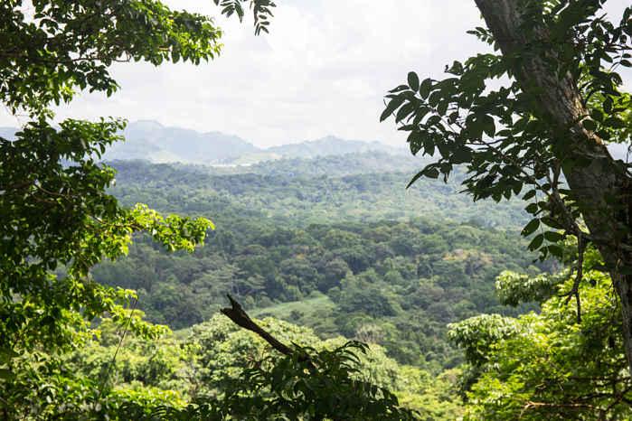 Parque Natural Metropolitano de Panamá