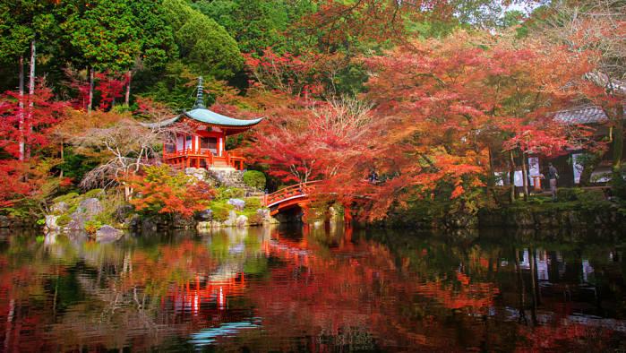 vista del momiji en un parque japonés