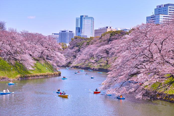 cerezos florecidos en japón