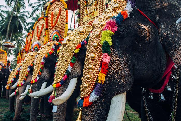 Festival del elefante en la India