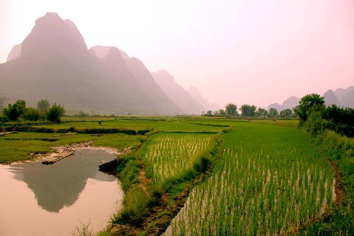 Terrazas de arroz long