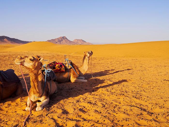 desierto zagora marrakech