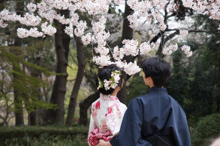 Sakura Hanimi contemplacion japon