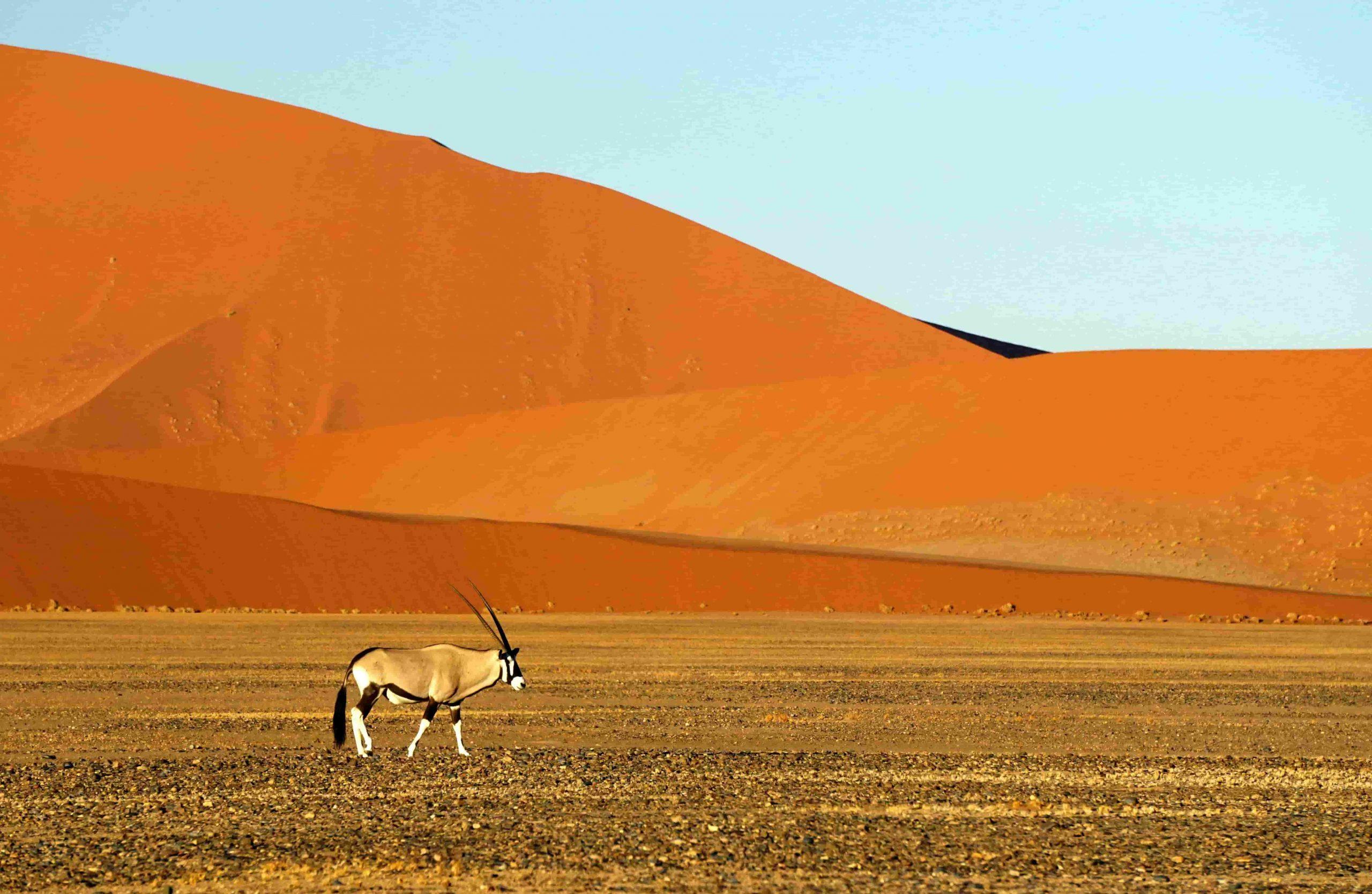 parque Namib-Naukluft